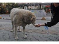 Eğlence mekânında çalışanlar sokak hayvanları için ter döküyor