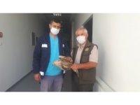 Yaralı Kızıl Şahin ve Atmaca tedaviye alındı