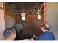 Kaplıcalara gelen engelli bireyler atlarla gezecek