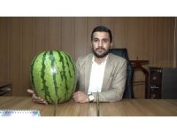 Kulp'ta 48 kiloluk Diyarbakır karpuzu yetiştirildi