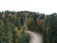 Sinop'ta sonbaharda renk cümbüşü