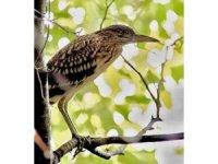 Hersek Lagünü'nde kuş türü 230'a çıktı