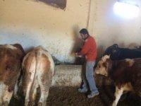 Çiftçiler girdi maliyetlerinin düşmesini bekliyor