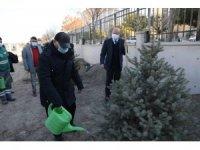Başkan Çolakbayrakdar, öğretmenlerle birlikte ağaç dikti
