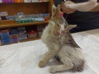 Sokakta bulunan yaralı kedi hayata tutundu