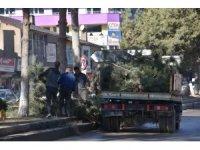 Tatvan Belediyesinden ağaç budama çalışması