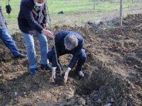 Serdivan'da meyve ağaçları toprakla buluştu