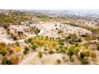 Tut'ta yayla evleri için ayrılan parsellerde talep patlaması yaşanıyor