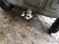 """Polonya'da çöp konteynerinde sıkışan yavru kediye """"yağlı"""" operasyon"""
