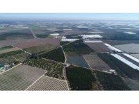 Mersin tarımının gayri safi yurtiçi hasılaya katkısı 14,3 milyar TL