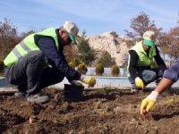 Van Büyükşehir Belediyesi 110 bin lale ve sümbül soğanı dikti