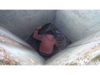 Kuyuda mahsur kalan kediyi çoban kurtardı