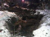 Yüksekova'da çamura saplanan at kurtarıldı