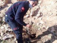 Su kuyusuna düşen köpek, itfaiye ekiplerince kurtarıldı