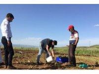 Bingöl'de hasadı yapılan lavanta, çay ve yağ olarak işlenecek
