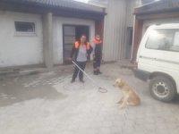 Yaralı köpeği ilk müdahale zabıta ekipleri tarafından yapıldı