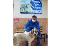 Görme engelli köpek, sıcak yuvasına kavuştu