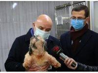 68 adet cins köpek Keçiören Belediyesi'nin korumasına alındı