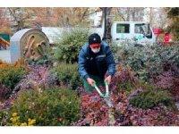 Çankaya Belediyesi Kuğulu Park'ı rengarenk çiçeklerle süsledi