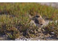 Avrupa'da üreyen kuş türlerinin 313'ü Türkiye'de de ürüyor