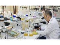 Yeni bir tür toprak bakterisi keşfedildi