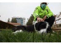 Malatya'da ayağı kırılan köpeğe polis sahip çıktı