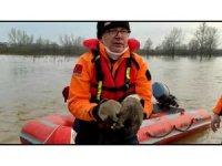 Taşkında mahsur kalan yavru köpekler kurtarıldı