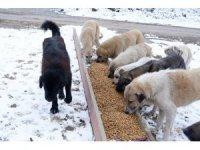 Karlı havada sokak hayvanları unutulmadı