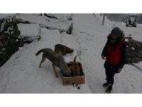 Karda aç kalan sokak hayvanlarını su ve mama bıraktılar