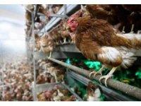 Düzce'den 4.2 milyon kanatlı hayvan sevkiyatı yapıldı