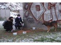Gaziosmanpaşa'da sokak hayvanları karda sahipsiz kalmadı