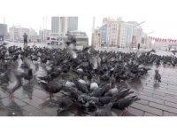 Beyaza bürünen Taksim kuşlara kaldı