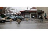 Sokaklar hayvanlara kaldı