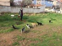Karacasu'da sokak canları unutulmadı