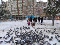 Soğuk havalarda sokak hayvanları unutulmadı