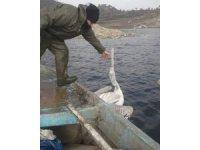 Demirköprü Barajı'nda balık ağına takılan pelikan kurtarıldı
