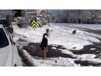 Sarıyer'de kar yağışında köpekler açlığa terk edildi