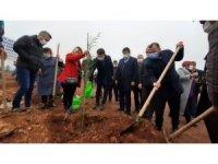 AK Parti'den İsmail Kökçe adına hatıra ormanı