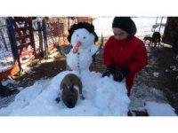 Kardan adamın havuçtan burnunu yiyen tavşan görenleri gülümsetti