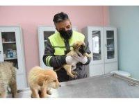 Altındağ Belediyesi donmak üzere olan 8 köpek yavrusuna sahip çıktı