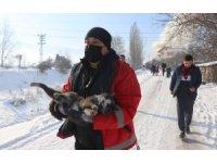 Yanan evden çıkarılan kedi tüm müdahalelere rağmen kurtarılamadı