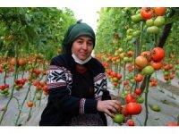Antalyalı domates üreticilerinden aracı tepkisi