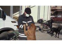 Köpeğini ezen otomobil sürücüsünden şikayetçi oldu