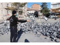 Polisin yemlediği güvercinler görsel şölen oluşturdu