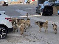 Mardin'de sokak köpekleri çocuklara saldırdı