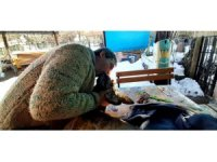 Yaralı karacayı hayata döndürmek için suni teneffüs ve kalp masajı yaptı