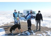 Erciş'te sokak hayvanlarına 'vefa' desteği