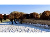Dondurucu soğuklarda sırtında ot taşıyarak hayvanlarını besliyor