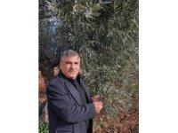 Kilis'te zeytin yaprağı araştırılıyor