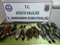 Düzce'de avladığı 13 kuşla yakalanan şahsa 13 bin TL ceza